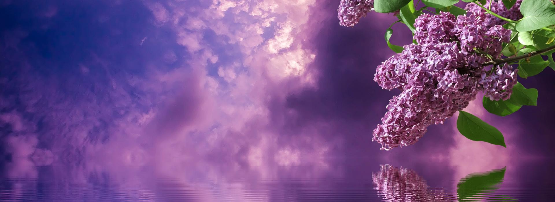 Purple Jade Holistics